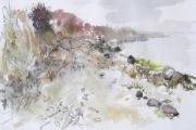 Swan_Landscape2012