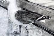 Swan_Gull_2015