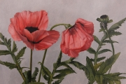 Sarah_Bird_Poppies_oil_on_panel_9x12