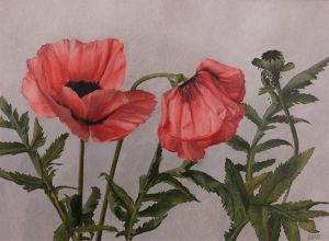 Sarah_Bird_Poppies_oil_on_panel_9x12.jpg