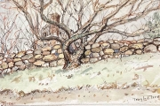 """Jessie Edwards, """"Tangled Tree"""", pen and ink with watercolor, matted, $150.00"""
