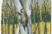 "Stephan Haley, ""Penobscot Porcupine"", 15 x 15"",  monoprint drawing,  $600.00"